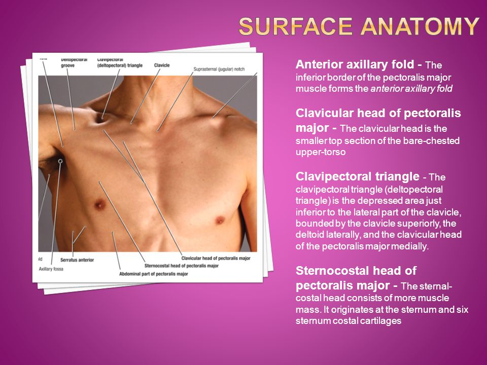 Surface Anatomy Anterior axillary fold - The inferior border of the pectoralis major muscle forms the anterior axillary fold.