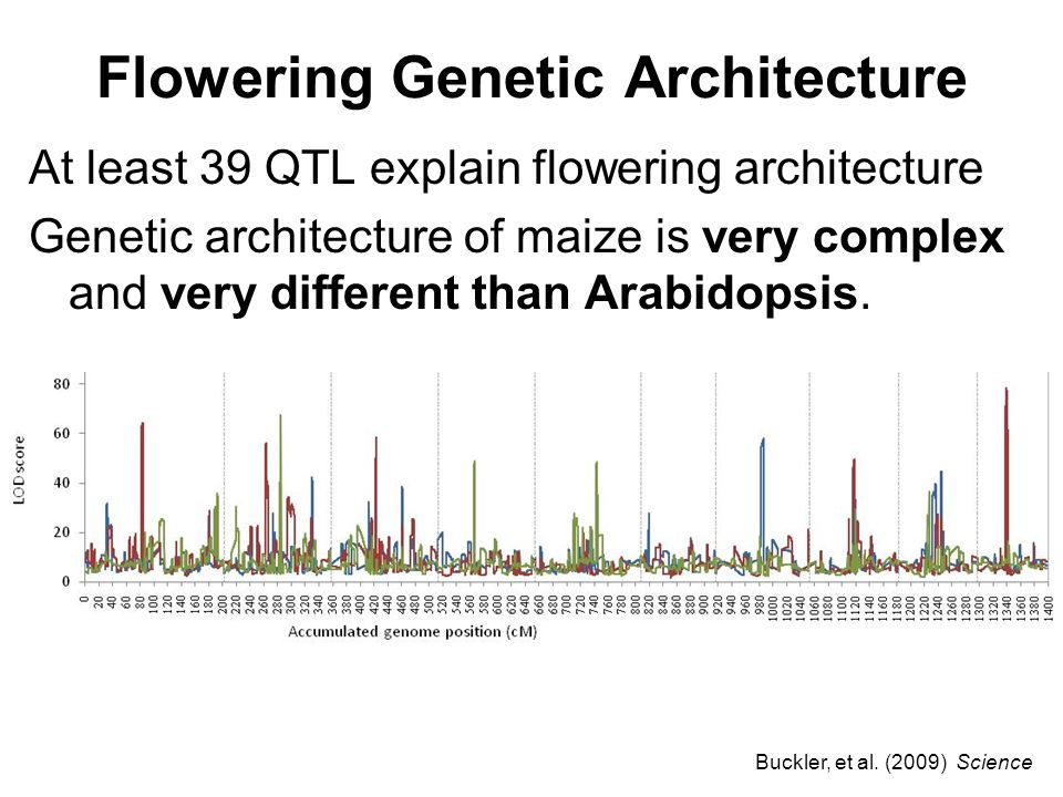 Flowering Genetic Architecture