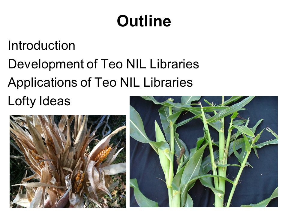 Outline Introduction Development of Teo NIL Libraries Applications of Teo NIL Libraries Lofty Ideas