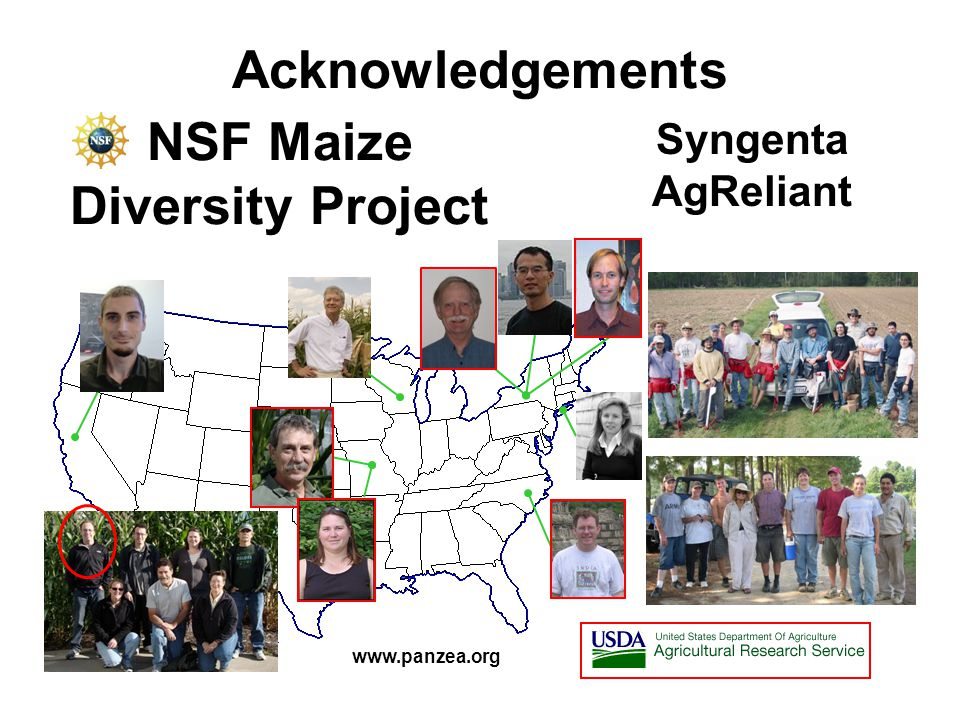 NSF Maize Diversity Project