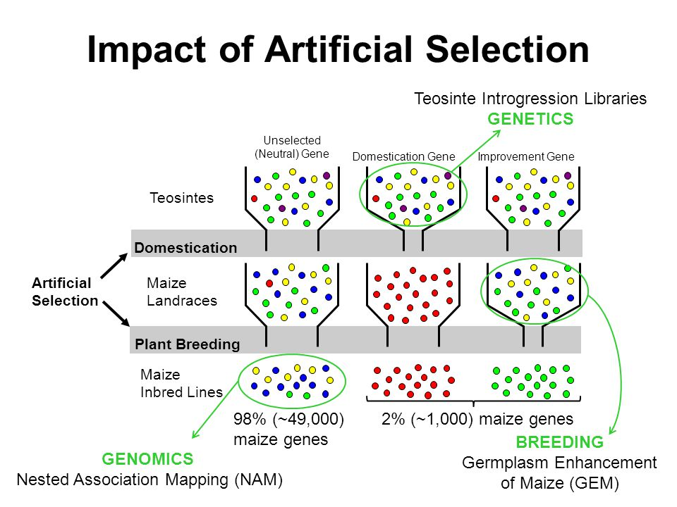 Impact of Artificial Selection