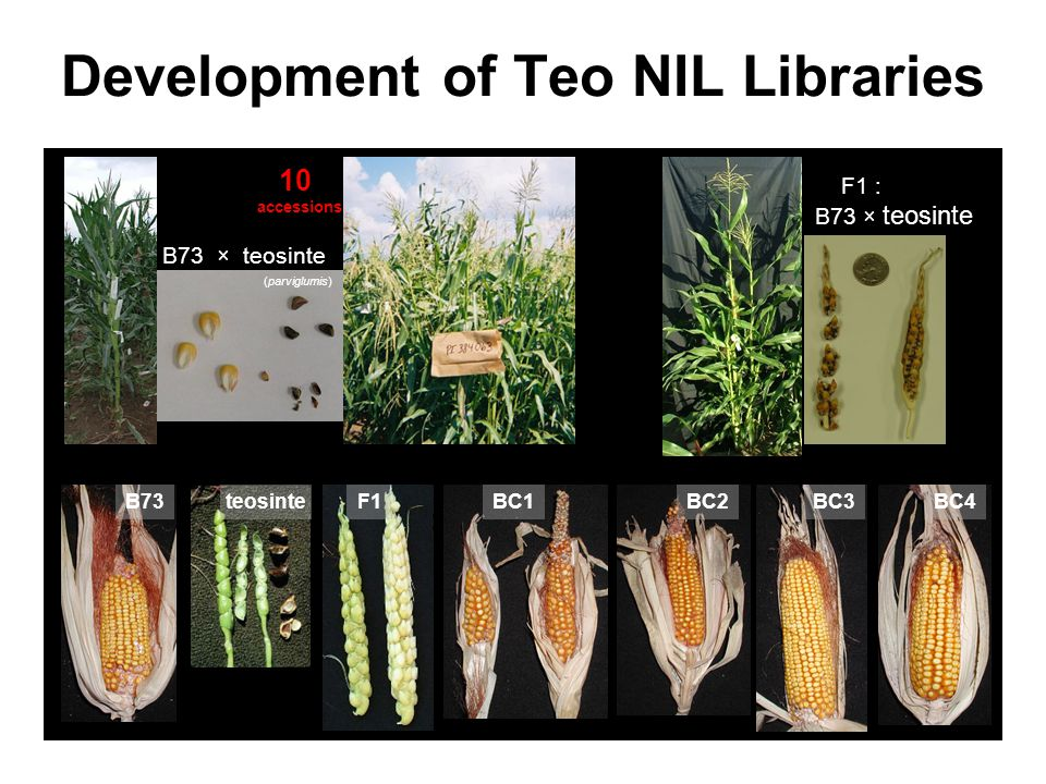 Development of Teo NIL Libraries