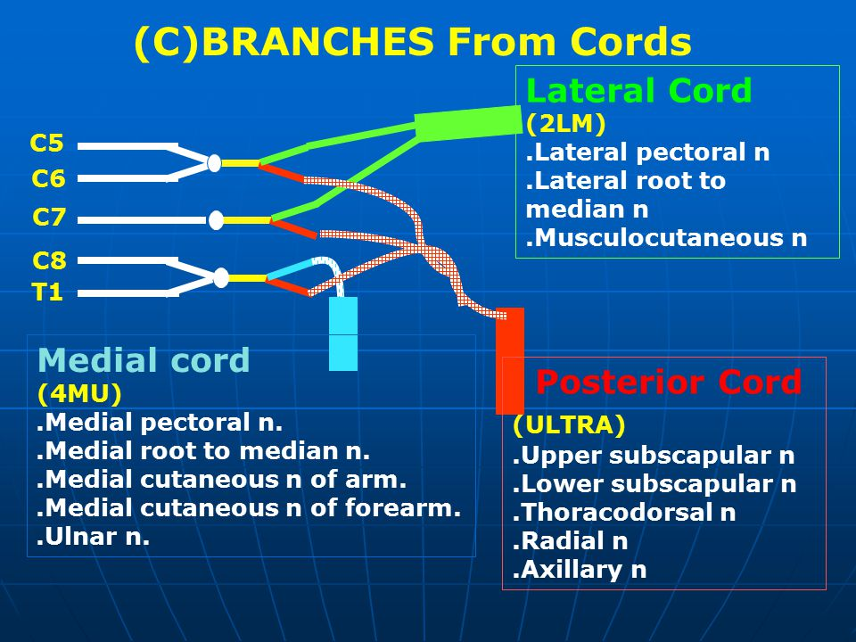 (C)BRANCHES From Cords