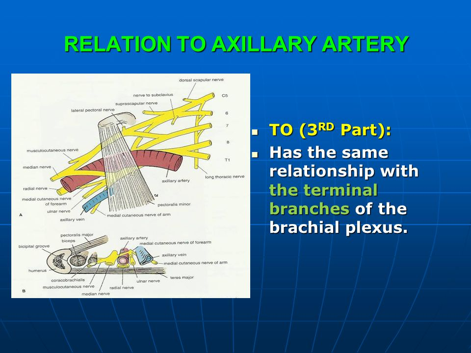 RELATION TO AXILLARY ARTERY