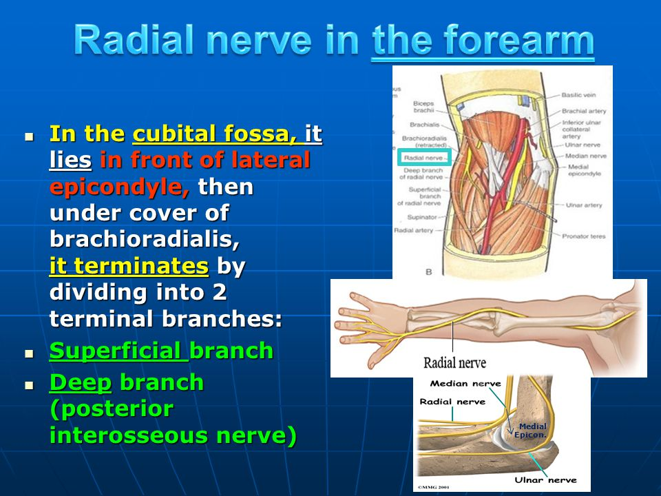 Radial nerve in the forearm