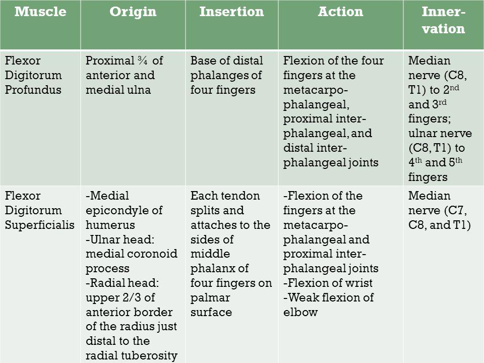 Muscle Origin Insertion Action Inner-vation