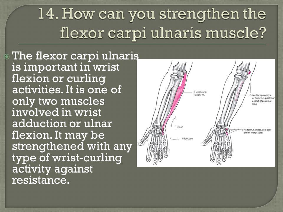 14. How can you strengthen the flexor carpi ulnaris muscle