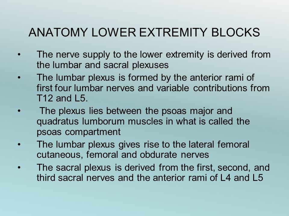 ANATOMY LOWER EXTREMITY BLOCKS