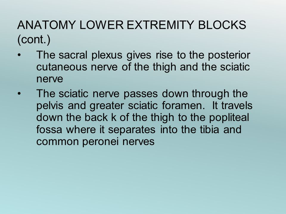 ANATOMY LOWER EXTREMITY BLOCKS (cont.)