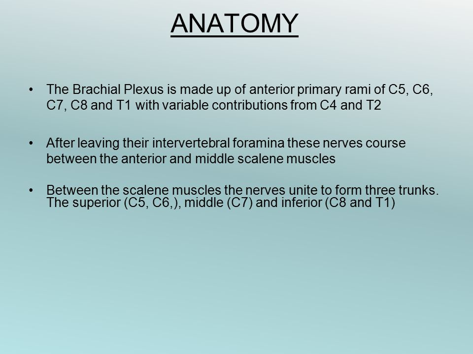 ANATOMY The Brachial Plexus is made up of anterior primary rami of C5, C6, C7, C8 and T1 with variable contributions from C4 and T2.