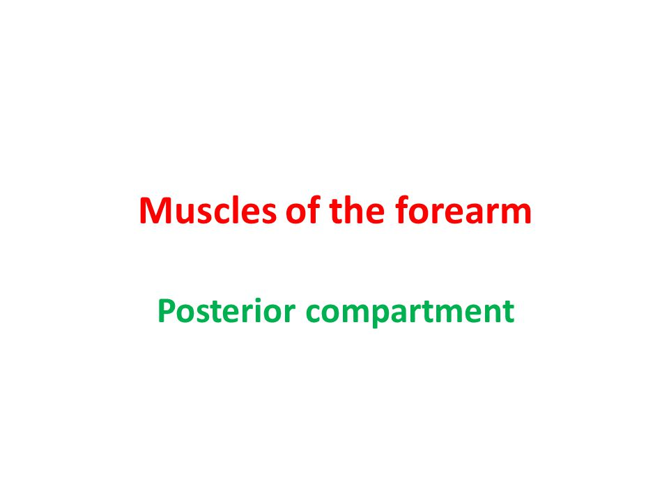Posterior compartment