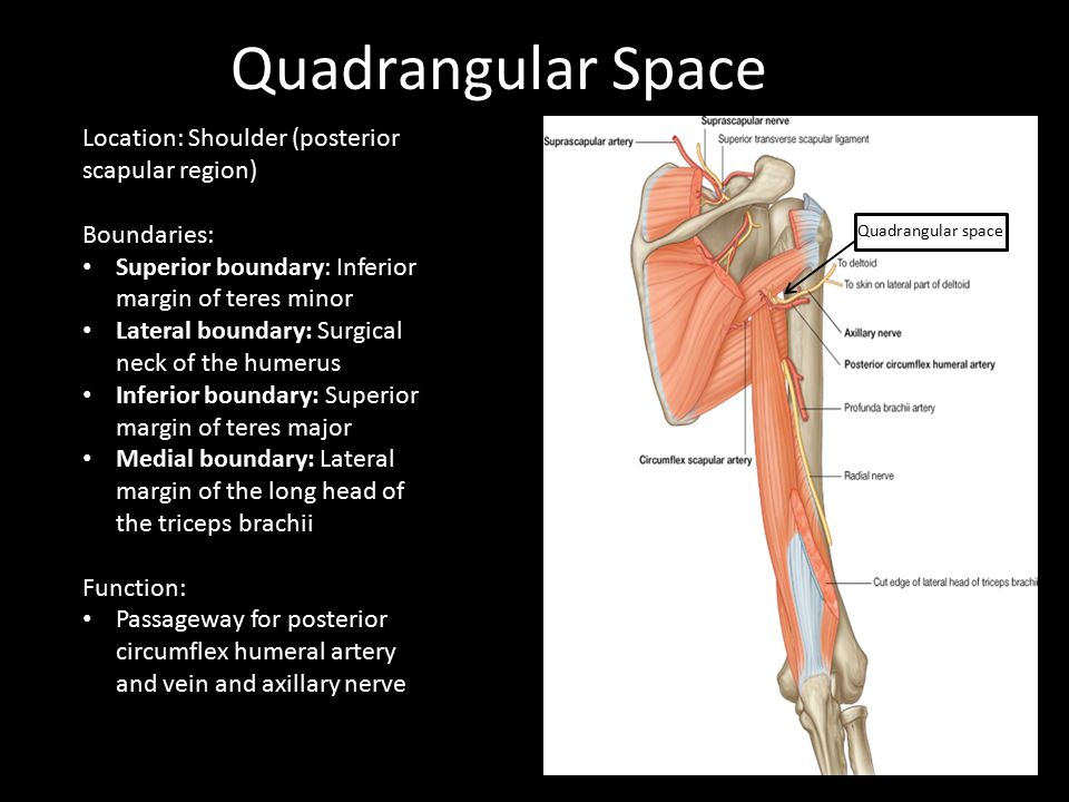 Quadrangular Space Location: Shoulder (posterior scapular region)