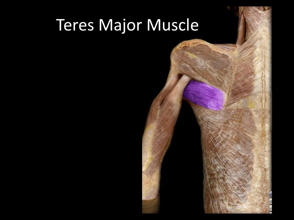 Teres Major Muscle GS: pg. 679