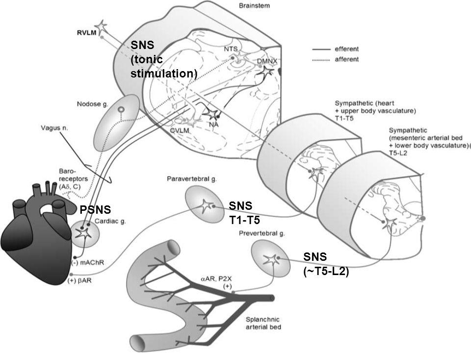 SNS (tonic stimulation) SNS T1-T5 PSNS SNS (~T5-L2)