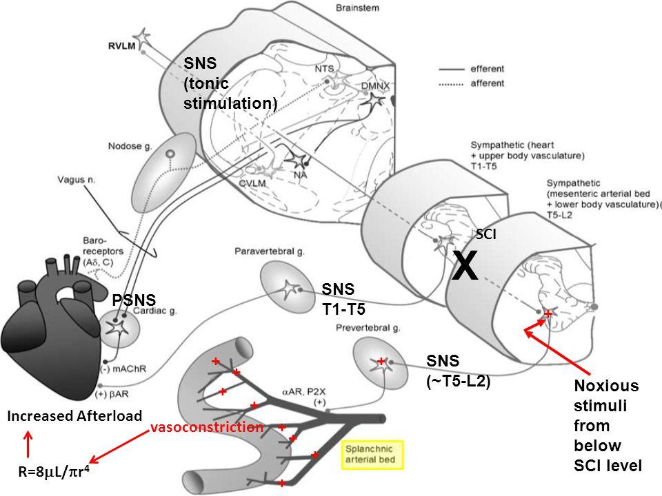 X SNS (tonic stimulation) SCI SNS T1-T5 PSNS + + + SNS (~T5-L2) +