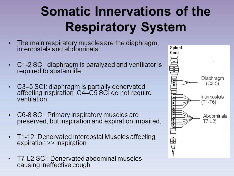 Somatic Innervations of the Respiratory System