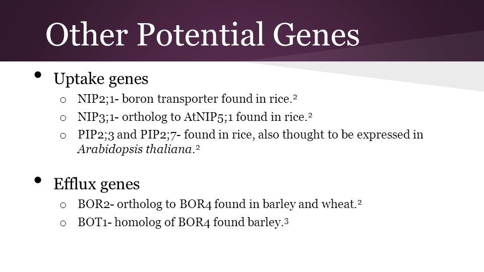 Other Potential Genes Uptake genes Efflux genes