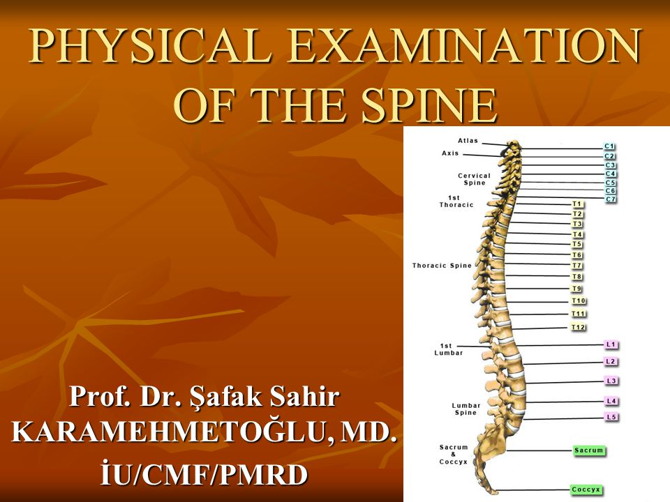 PHYSICAL EXAMINATION OF THE SPINE