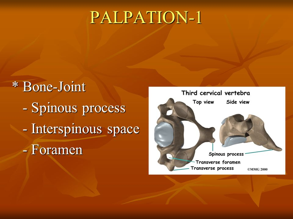 PALPATION-1 * Bone-Joint - Spinous process - Interspinous space