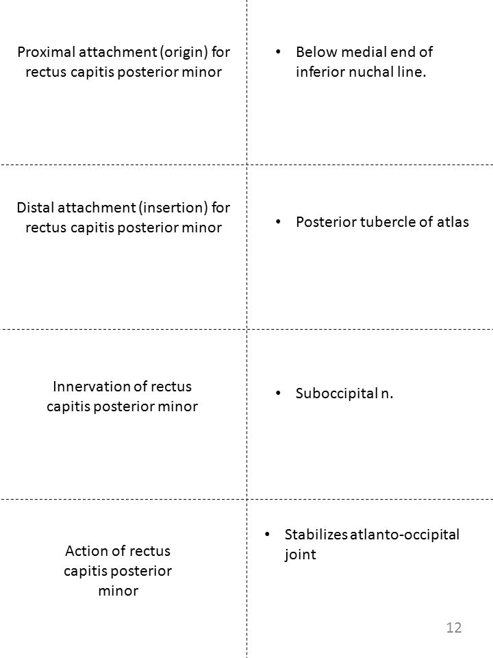 Proximal attachment (origin) for rectus capitis posterior minor