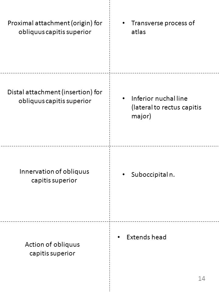 Proximal attachment (origin) for obliquus capitis superior