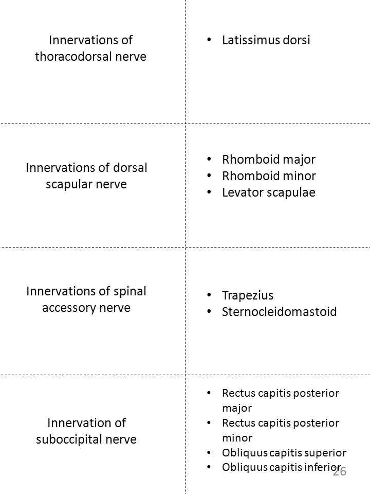 Innervations of thoracodorsal nerve Latissimus dorsi