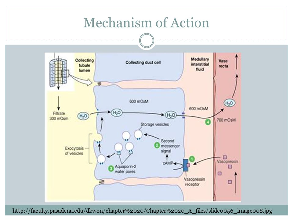 Mechanism of Action http://faculty.pasadena.edu/dkwon/chapter%2020/Chapter%2020_A_files/slide0056_image008.jpg.