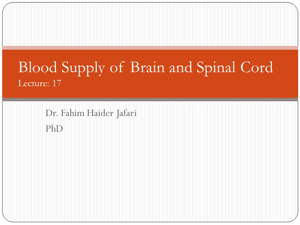Blood Supply of Brain and Spinal Cord Lecture: 17