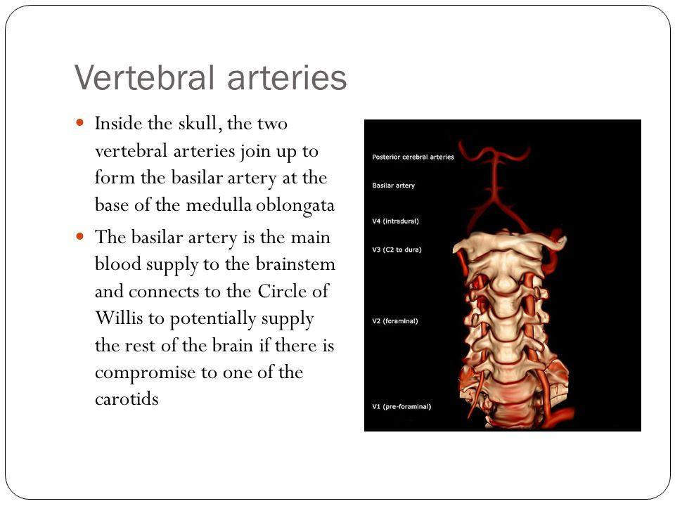 Vertebral arteries Inside the skull, the two vertebral arteries join up to form the basilar artery at the base of the medulla oblongata.