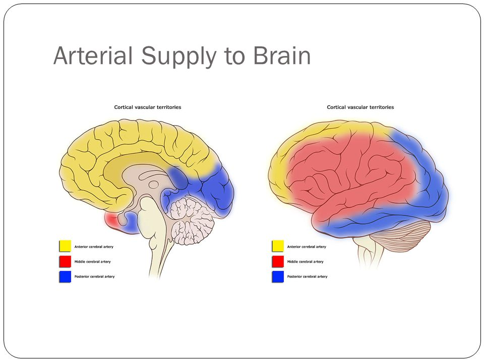 Arterial Supply to Brain