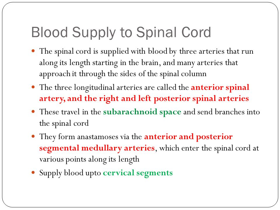 Blood Supply to Spinal Cord