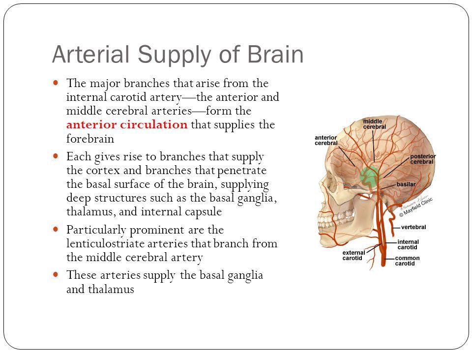 Arterial Supply of Brain