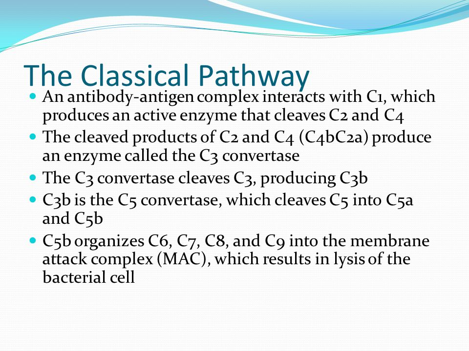 The Classical Pathway An antibody-antigen complex interacts with C1, which produces an active enzyme that cleaves C2 and C4.