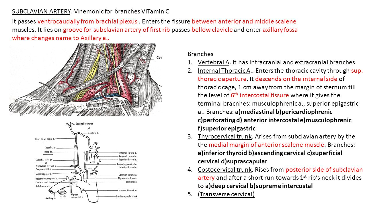 SUBCLAVIAN ARTERY. Mnemonic for branches VITamin C