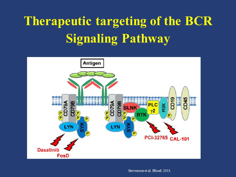 Therapeutic targeting of the BCR Signaling Pathway