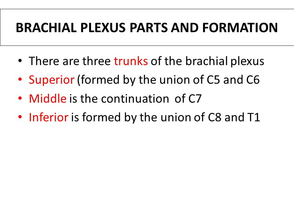 BRACHIAL PLEXUS PARTS AND FORMATION