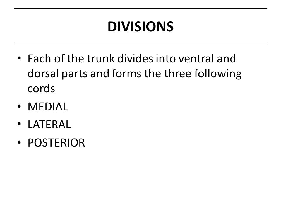 DIVISIONS Each of the trunk divides into ventral and dorsal parts and forms the three following cords.