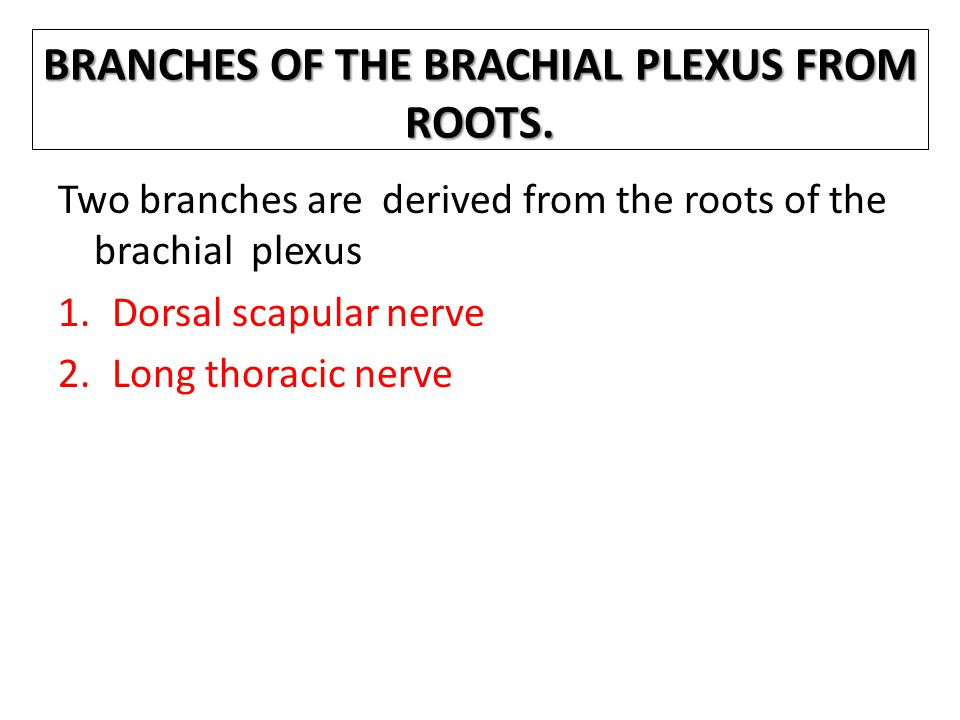 BRANCHES OF THE BRACHIAL PLEXUS FROM ROOTS.