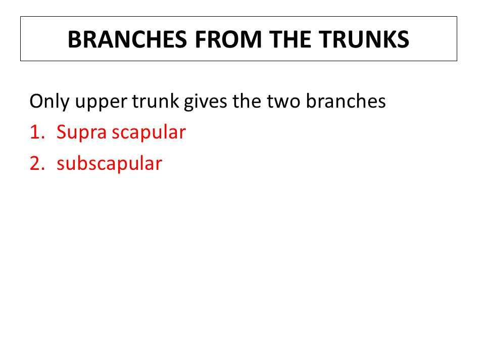 BRANCHES FROM THE TRUNKS