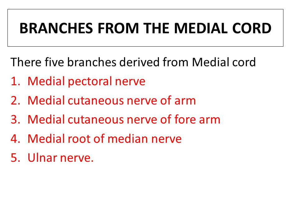 BRANCHES FROM THE MEDIAL CORD