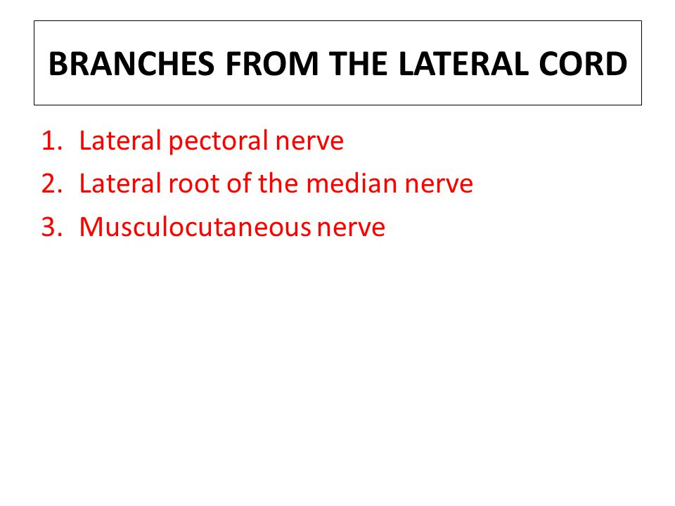BRANCHES FROM THE LATERAL CORD
