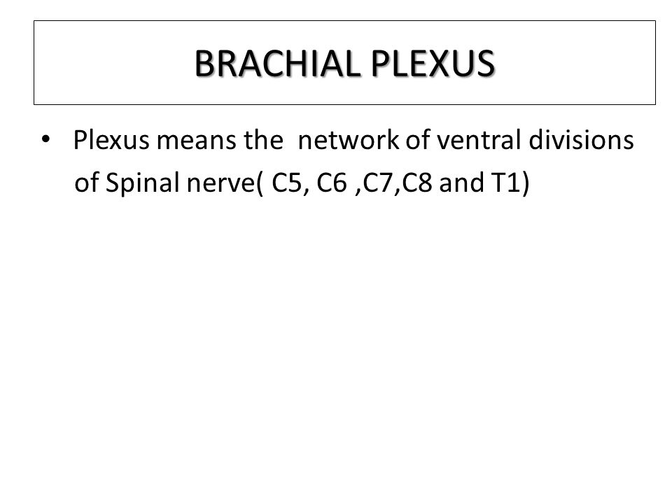 BRACHIAL PLEXUS Plexus means the network of ventral divisions