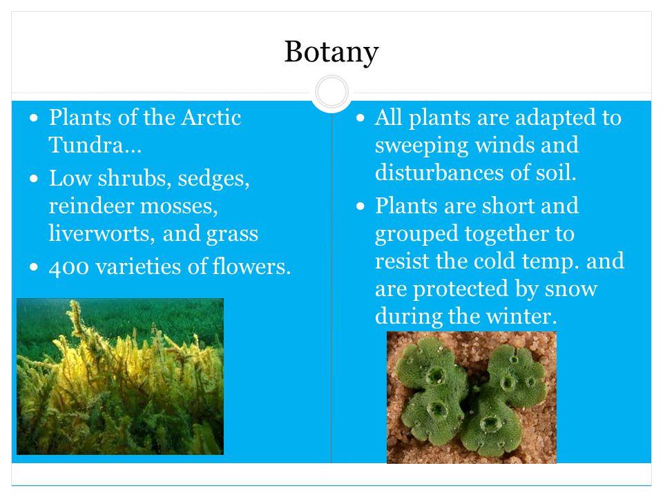 Botany Plants of the Arctic Tundra…