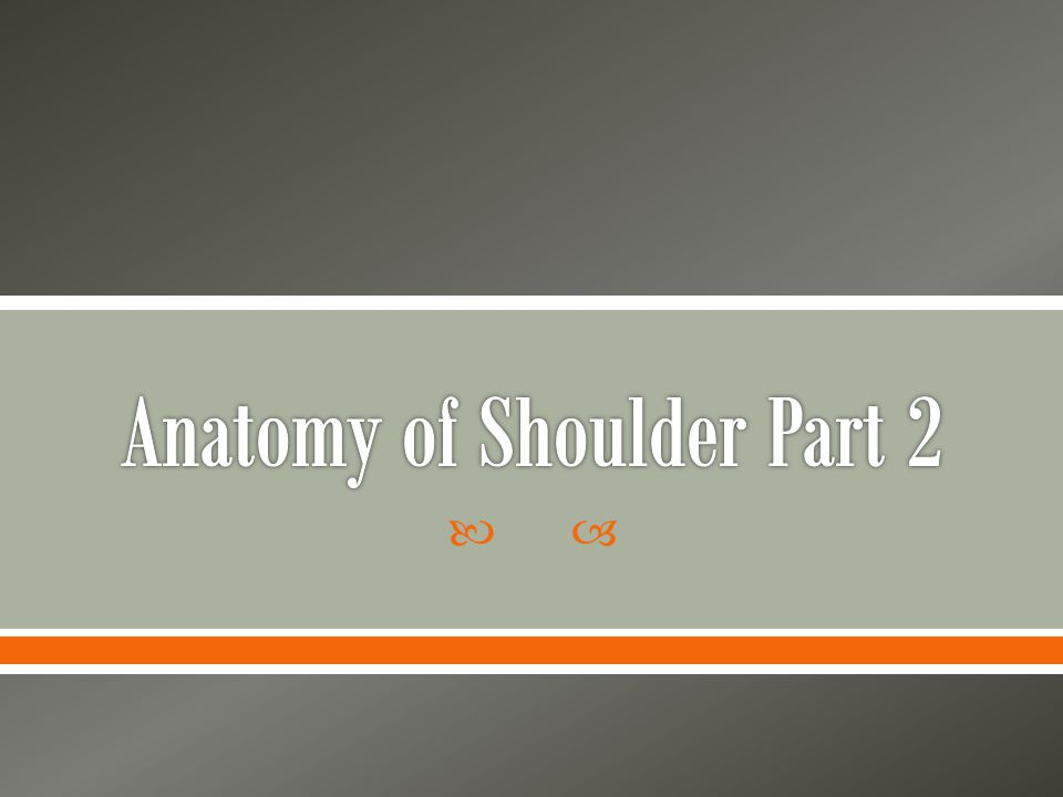 Anatomy of Shoulder Part 2