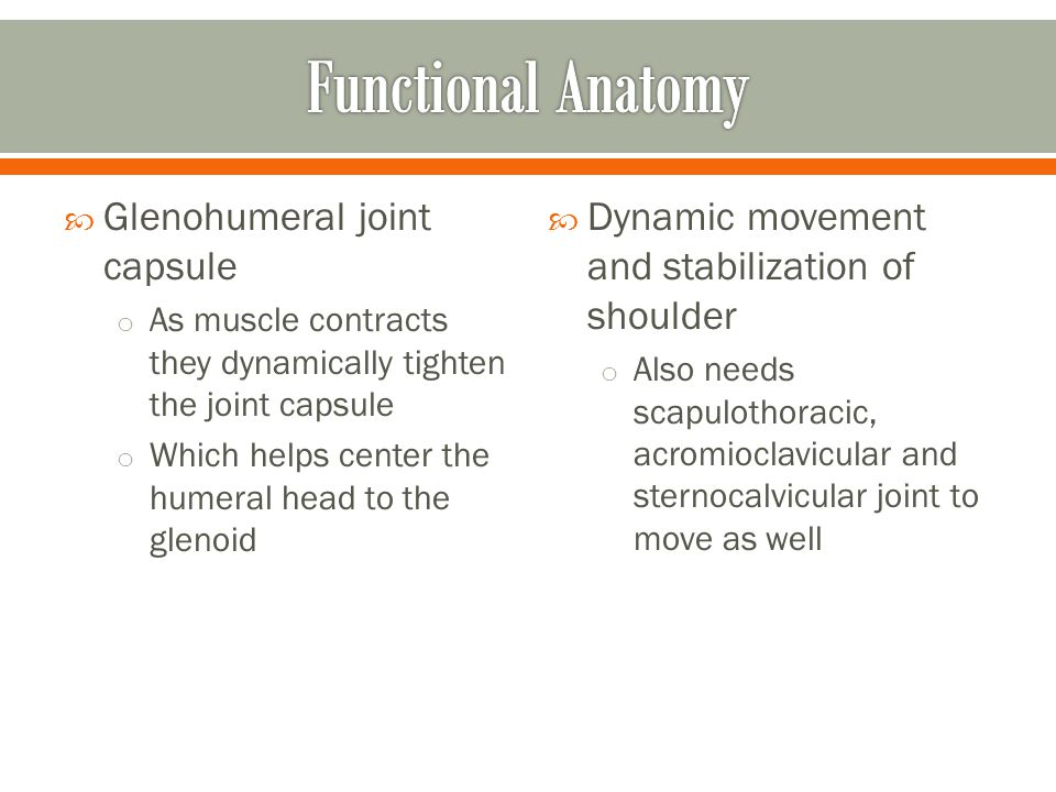 Functional Anatomy Glenohumeral joint capsule
