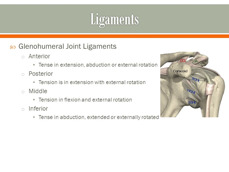 Ligaments Glenohumeral Joint Ligaments Anterior Posterior Middle
