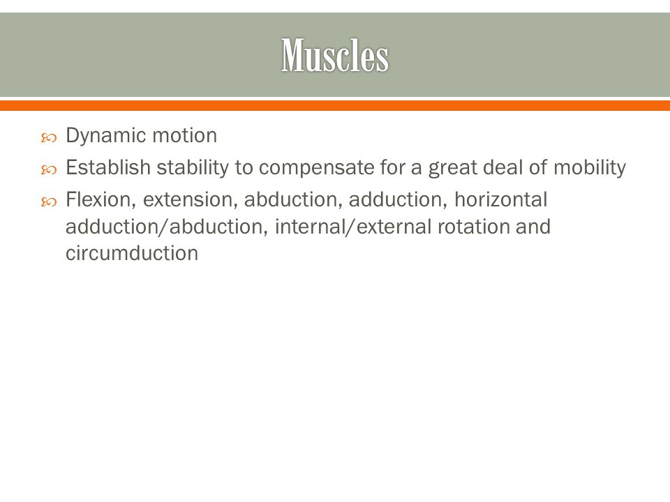 Muscles Dynamic motion