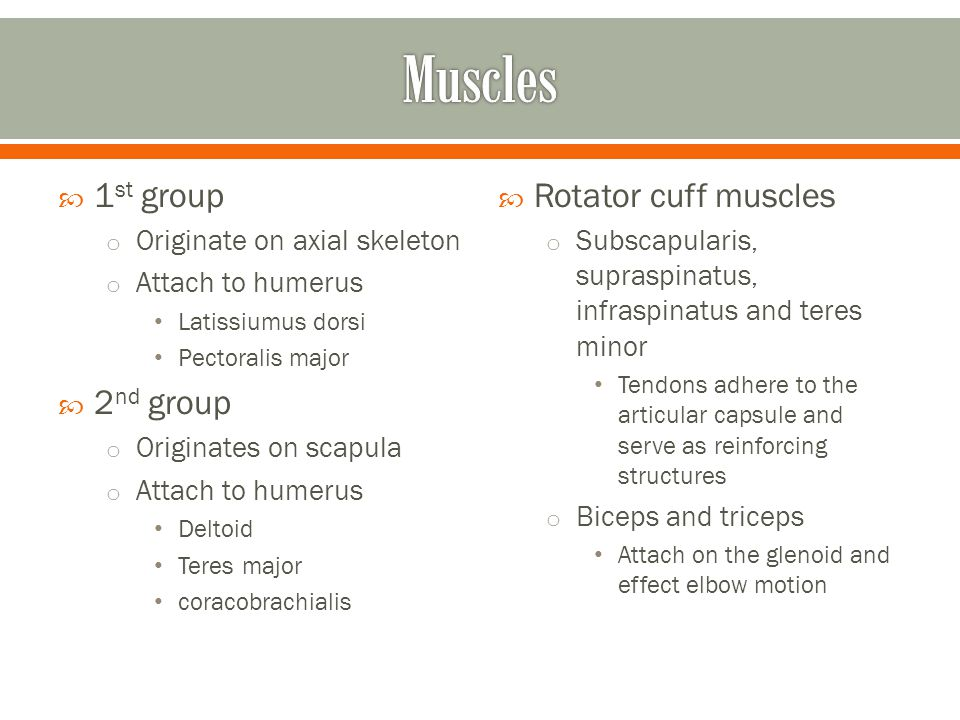 Muscles 1st group 2nd group Rotator cuff muscles