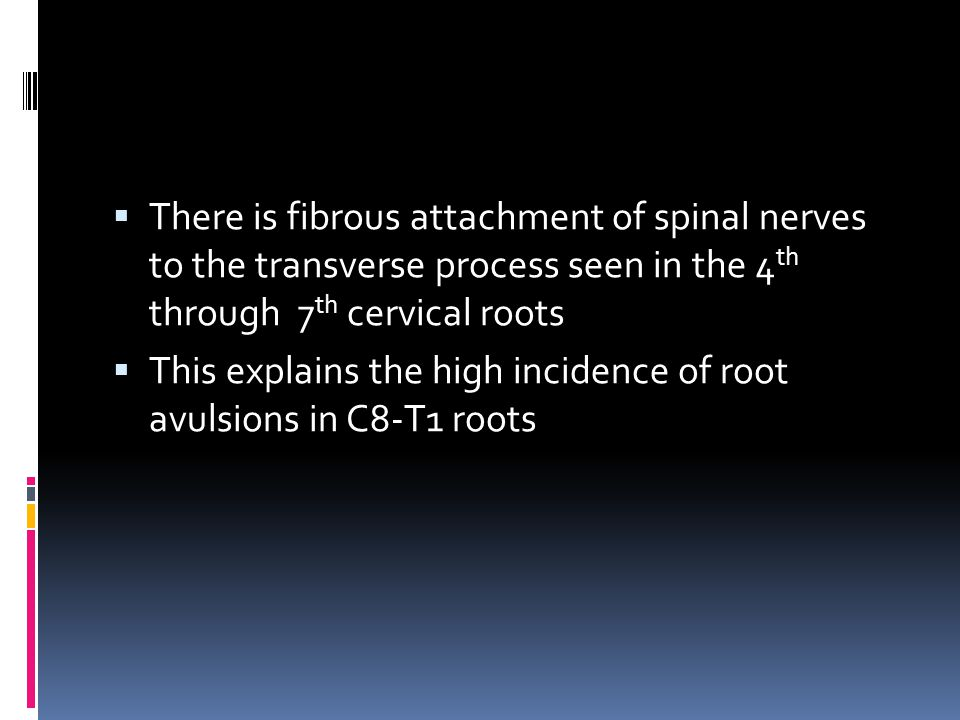 There is fibrous attachment of spinal nerves to the transverse process seen in the 4th through 7th cervical roots