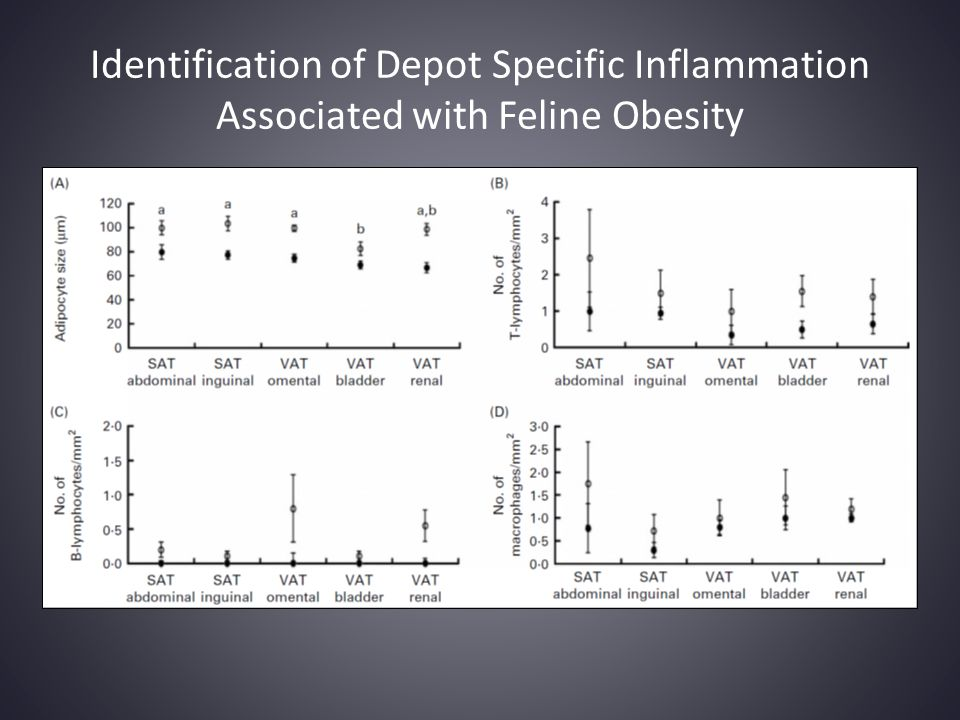 Identification of Depot Specific Inflammation Associated with Feline Obesity